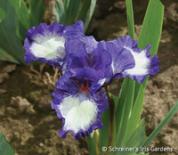 Image Tiny Tots Iris Collection