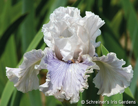 Image 5 Iris of the Year Iris Collection 2017