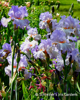 Image Create Your Own Masterpiece Iris Collection