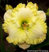 Image Spring Harvest