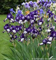 Image Mid Century Iris Collection