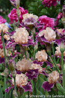 Image Create Your Own Classics Iris Collection