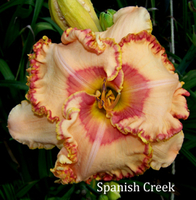 Image Dormant Daylily Collection
