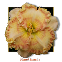 Image Aloha Daylily Collection
