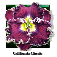 Image California Dreaming Daylily Collection
