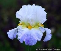 Image Spring Quartet Iris Collection