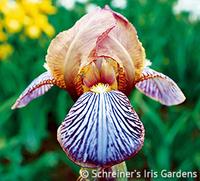 Image Border & Table Beaded Iris