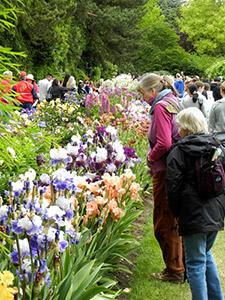 Iris Plant Iris Nurseries Review
